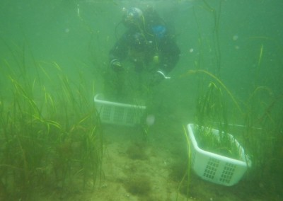 Planting at Sechelt Inlet 2014